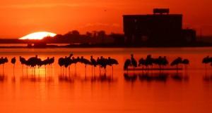Proyectan reactivar la isla de la laguna Melincué – Santa Fe $200 Millones