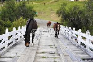 Bariloche: Reacondicionamiento del puente del lago Hess