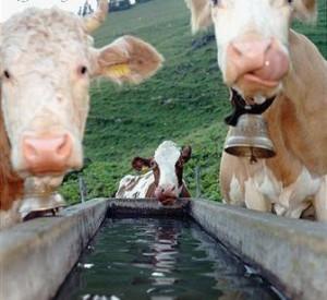 Obra abastecimiento de agua para ganado