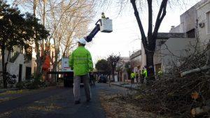Ofertas para el Servicio de mantenimiento del arbolado público para las 15 comunas porteñas por dos años $ 2.574 Millones
