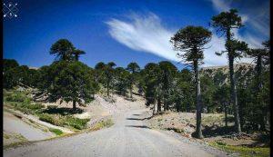 Licitan 35 kilómetros de la ruta 23 de Neuquén $4.094M